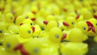 Rubber ducks shallow depth of field