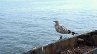 Seagull sitting on edge of ocean water