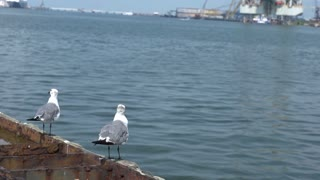 Seagull takes off from pier in slow motion