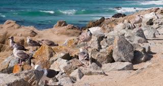 Seagulls hanging out on rocks near ocean 4k