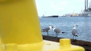 Seagulls sitting by ocean slider shot