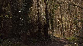 Secret dirt path going through woods 4k