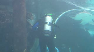 Shark Swimming by Diver Fixing Tube