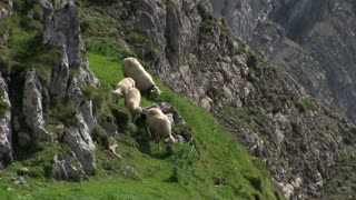 Sheep standing on side of mountain