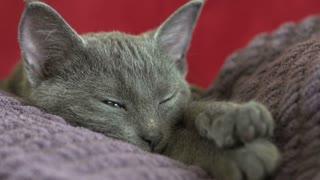 Sleeping kitten opens green eyes