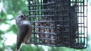 Small bird lands on feeding station and eats 4k