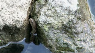 Snake Hiding Between Rocks in Water