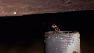Spider crawls down into metal tube at night 4k