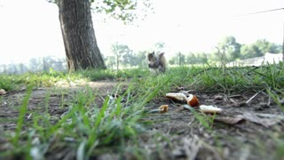 Squirrel eating food near camera