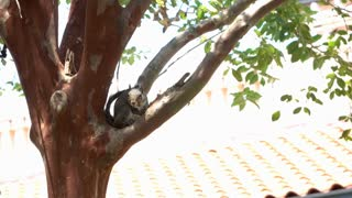 Squirrel sitting in tree looking at camera 4k