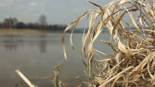 Straw on bank of river