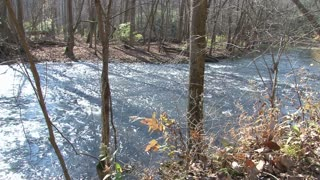 Stream Flowing Through Woods