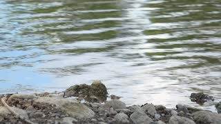 Stream shore with rocks and water ripples 4k