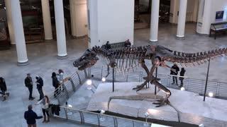 Sue Tyrannosaurus Rex skeleton in Field Museum 4k