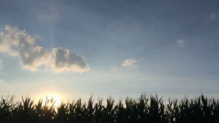 Sun going down with corn field and blue sky