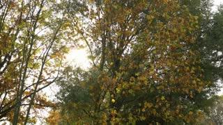 Sun peeking through trees on beautiful fall day 4k