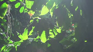 Sunlight coming through leaves in rainforest