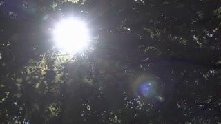 Sunlight shining through the ceiling branches of forest 4k