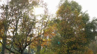Sunlight through trees dolly shot 4k