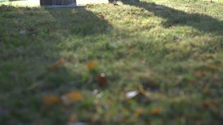 Sunrise at graveyard with gravestone in sunlight tilt reveal shot 4k