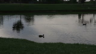 Sunset on pond with ducks