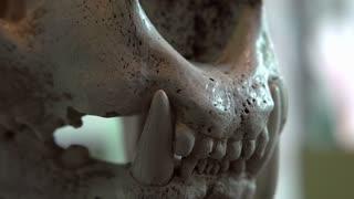 Tiger skull focus on teeth