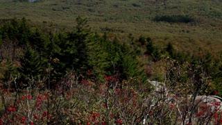 Tilt up to wilderness below from Mount Monadnock