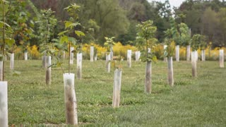 Training young trees growing in row with plastic supports 4k