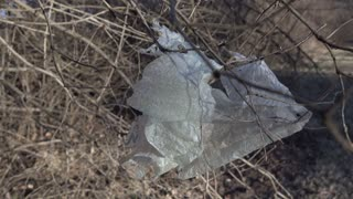 Trash bag caught on tree branch in forest 4k