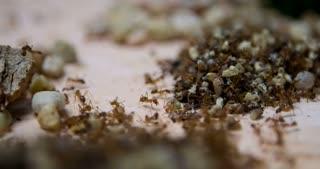 Trash yard for honey ant colony 4k