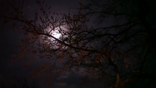 Tree with moon in background