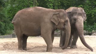 Two elephants standing together