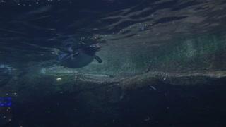 Underwater View of Penguin Swimming