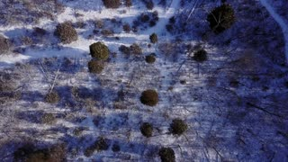 Birds eye view of snow covered winter forest aerial 4k