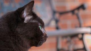 Black Cat Licks Lips In Slow Motion