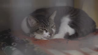 Cat laying in kennel cage resting