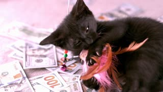 Cat Playing With Toy On Pile Of Money Slow Motion