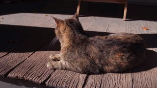 Cat sitting on porch looking away from camera 4k