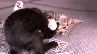 Cats fighting on top of cash pile slow motion