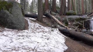 Establishing shot of Sequoia National Park Forest 4k