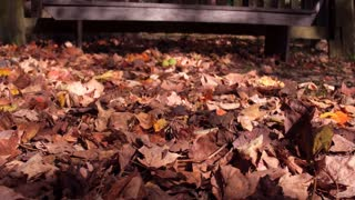 Fall leaves in shadows of sunshine on ground 4k