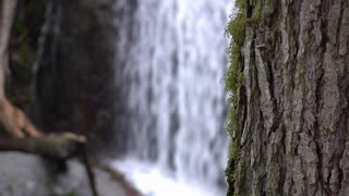 Focus on growing moss on tree with waterfall in background 4k