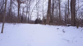 Following snow covered path through forest 4k