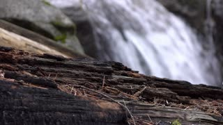Forest with focus on fallen wood and waterfall in background 4k