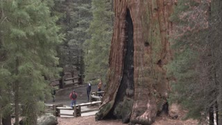 Giant General Sherman Tree base with visitors at Park 4k