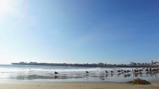 Group Of Seagulls Standing Along Ocean Waves