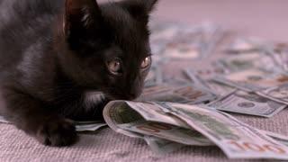 Kitten guarding piles of money in slow motion