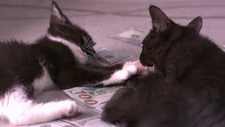 Kittens Fighting On Pile Of Money Slow Motion