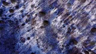 Looking down over snow covered forest ground aerial view 4k