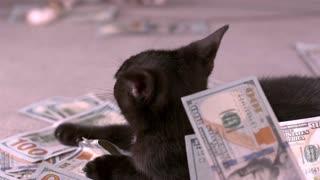Money falling on top of kitten slow motion